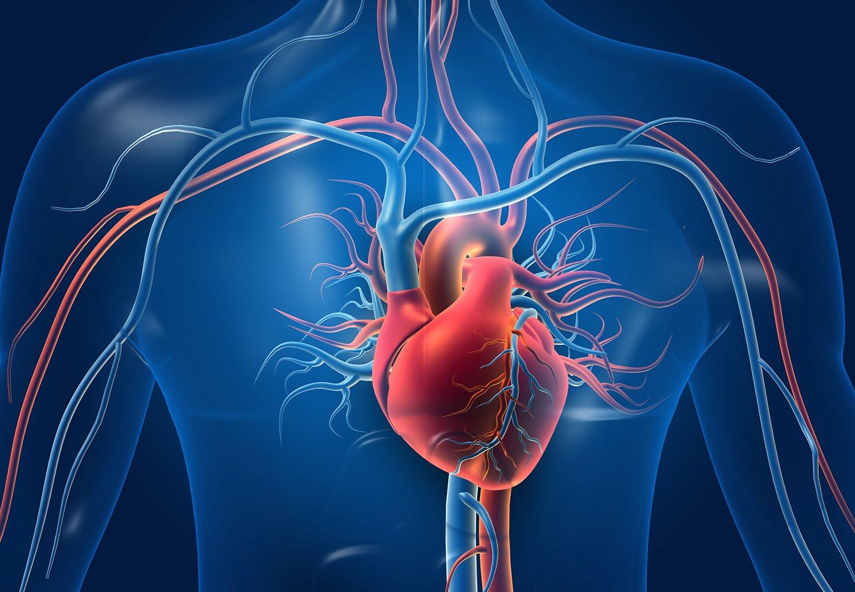 Conitec recomenda incorporação do implante percutâneo de válvula aórtica (TAVi) para estenose aórtica grave